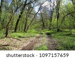 dirty forest road in spring time | Shutterstock . vector #1097157659
