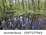 dirty road with puddle in green ... | Shutterstock . vector #1097157965