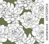 succulents watercolor... | Shutterstock . vector #1097220914