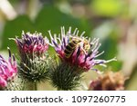 close up of caucasian and... | Shutterstock . vector #1097260775