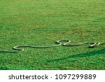 a nylon rope object on a... | Shutterstock . vector #1097299889