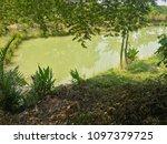 green fresh water fish pond ... | Shutterstock . vector #1097379725
