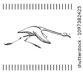 hand drawn running flamingo in... | Shutterstock .eps vector #1097382425