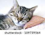 Stock photo small cat 109739564