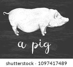 hand drawn vector illustration... | Shutterstock .eps vector #1097417489