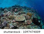 Small photo of A beautiful and healthy coral reef thrives near Alor, Indonesia. This remote, tropical region, within the Coral Triangle, harbors extraordinary marine biodiversity.