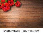 red hibiscus flower on caulked...   Shutterstock . vector #1097480225