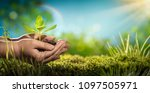 human hands holding young plant.... | Shutterstock . vector #1097505971