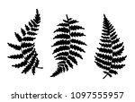 vector botanical illustration... | Shutterstock .eps vector #1097555957