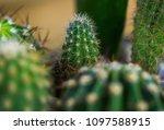 bit spiky with sticking spikes  ... | Shutterstock . vector #1097588915