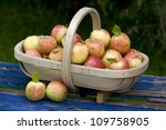 freshly harvested apples gathered in a wooden trug - stock photo