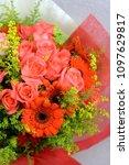 rose   gerbera and peacock... | Shutterstock . vector #1097629817