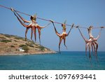 Small photo of Coleoidea or Dibranchiata hung up for drying, island crete, greece, europe