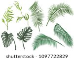 set green leaves of tropical...   Shutterstock .eps vector #1097722829