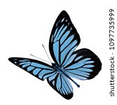 Small photo of Fascinated flying butterfly, Common or Malayan wanderer beautiful pale blue with black strips butterfly in natural color profile (Pareronia valeria)