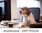 beagle dressed as businessman... | Shutterstock . vector #1097793134