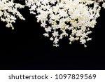 lovely little white flowers on... | Shutterstock . vector #1097829569