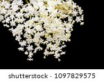 lace of small white flowers on... | Shutterstock . vector #1097829575