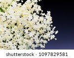 white lace of small flowers... | Shutterstock . vector #1097829581