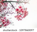 soft light in morning to pink...   Shutterstock . vector #1097860097