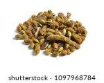 dried medicinal herbs raw... | Shutterstock . vector #1097968784
