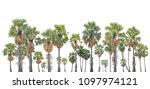 Collection Asian Palmyra Palm Trees - Fine Art prints