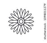 gerbera flower line icon... | Shutterstock .eps vector #1098011279