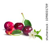 fresh  nutritious and tasty... | Shutterstock .eps vector #1098031709