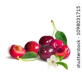 fresh  nutritious and tasty... | Shutterstock .eps vector #1098031715