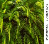 background tropical greenery.... | Shutterstock . vector #1098054641