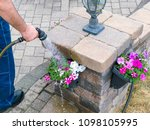 man watering colorful spring... | Shutterstock . vector #1098105995