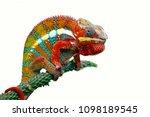 Chameleon With White Backround...