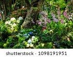 orchid flower garden   Shutterstock . vector #1098191951
