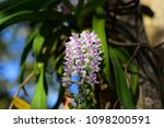 orchids bloom brace reflect the ...   Shutterstock . vector #1098200591