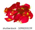 red rose petals on white... | Shutterstock . vector #1098203159