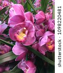 close up beautiful orchid...   Shutterstock . vector #1098220481