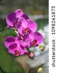 a bouquet of beautiful purple...   Shutterstock . vector #1098261875