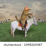 Stock photo the cat cowboy on a horse grazes his cows 1098265487