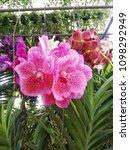 pink orchid pattern   Shutterstock . vector #1098292949