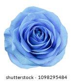 Blue Flower Rose  On White...