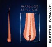 hair bulb under the microscope. ... | Shutterstock .eps vector #1098299159