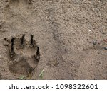 Footprint Of A Dog