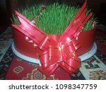 nowruz holiday and  sprouted... | Shutterstock . vector #1098347759