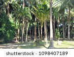 tropical islands  palm trees... | Shutterstock . vector #1098407189