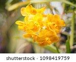 the bloom orchids in the garden ...   Shutterstock . vector #1098419759