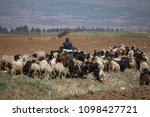 shepherd and goat herder  beeka ... | Shutterstock . vector #1098427721
