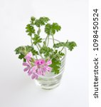 geranium fragrance with pink... | Shutterstock . vector #1098450524