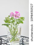 geranium fragrance with pink... | Shutterstock . vector #1098450527