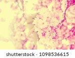 springtime outdoor scene....   Shutterstock . vector #1098536615