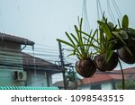 orchids and rain   Shutterstock . vector #1098543515